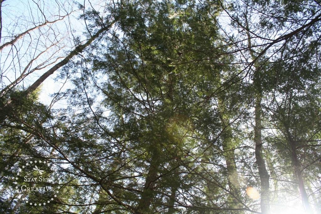 Canopy on the Lye Brook Falls Trail