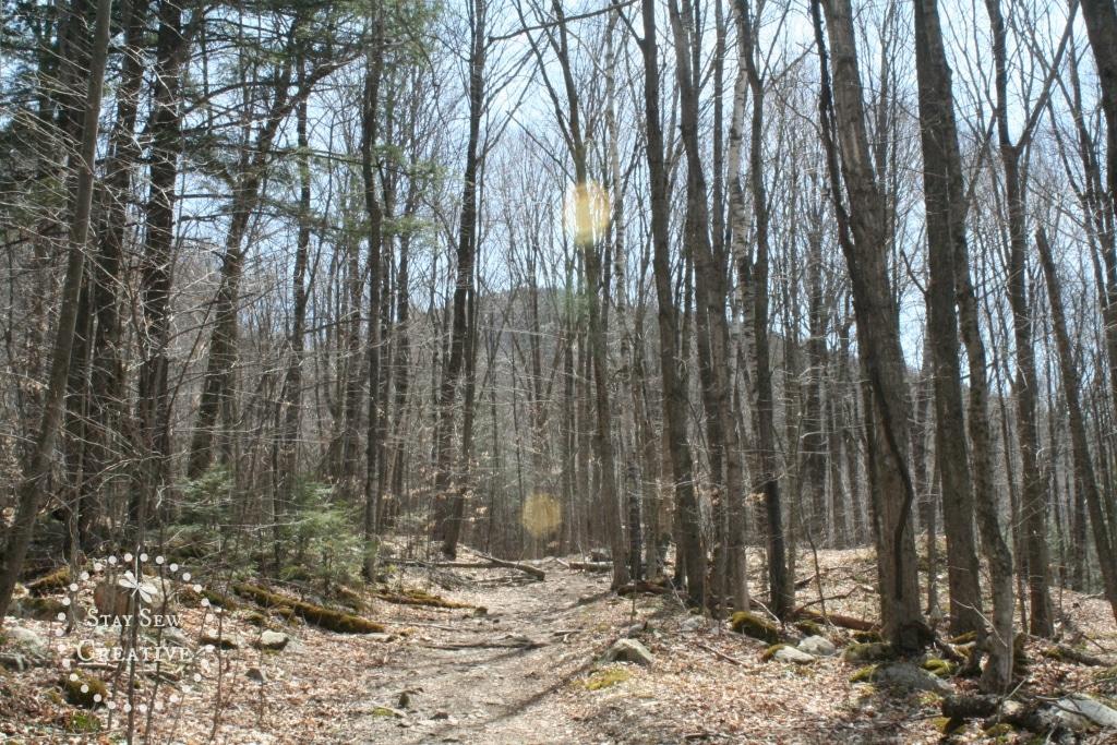 Nice mountain views through the trees on Lye Brook Falls Trail